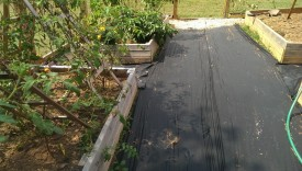 Weed barrier cloth before mulch